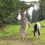 Wer sagt, dass Esel dumm sind?